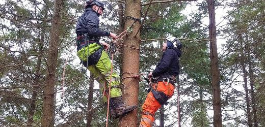 TREE CLIMBING AND AERIAL RESCUE